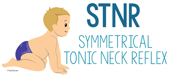 Symmetrical Tonic Neck Reflex (STNR)- Copyright ToolsToGrowOT.com
